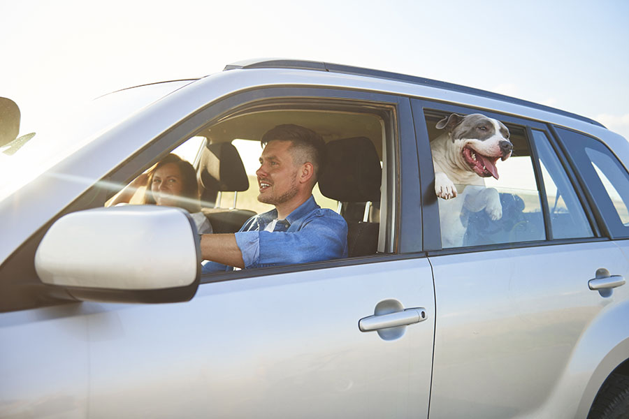 Insurance Quote - Family Going on a Road Trip With Their Dog